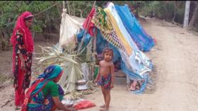 বাড়িঘর এখনও পানিবন্দী; কলাপাড়ায় নিঃস্ব শত পরিবারের আশ্রয় বেড়িবাঁধে